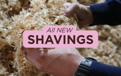 The 7 reasons for using our SHAVINGS revealed